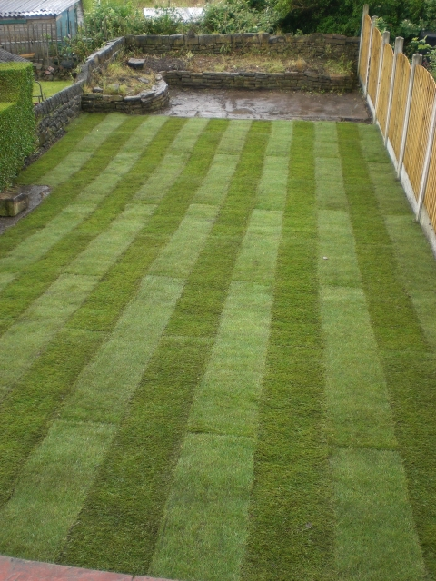 how to lay a lawn